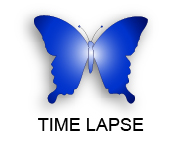 Blue Butterfly Media Time Lapse Photography
